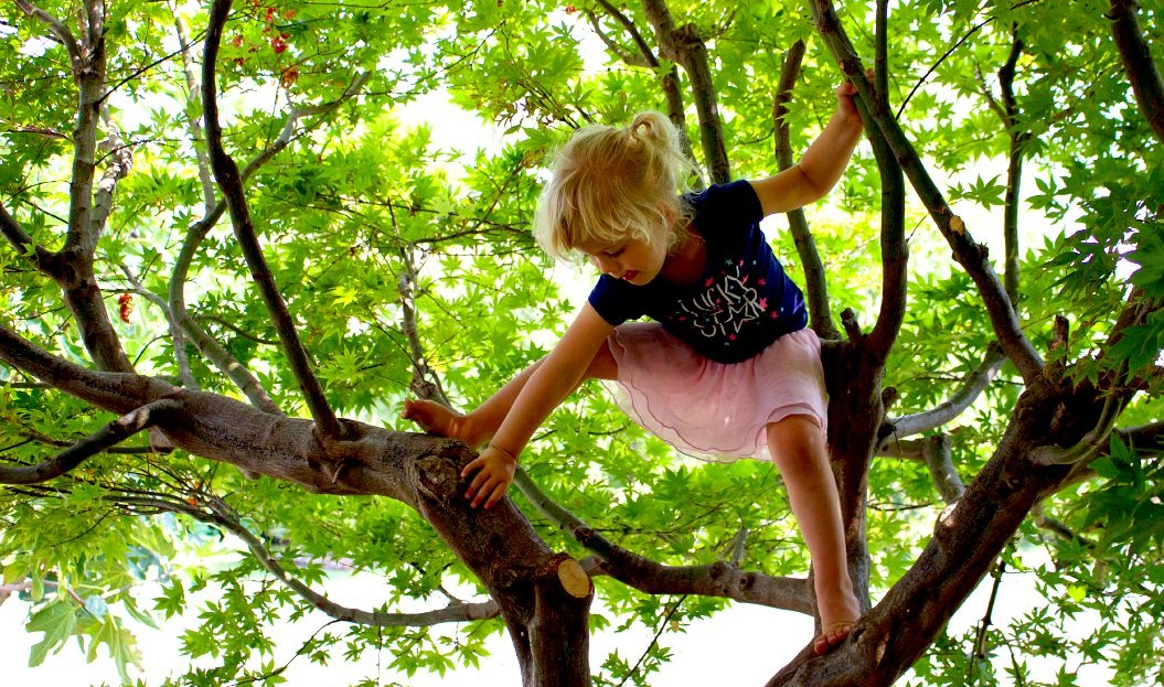 Experiential learning. Little girl climbing big tree